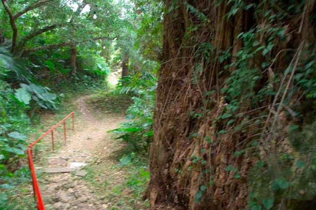 trail going to shrine