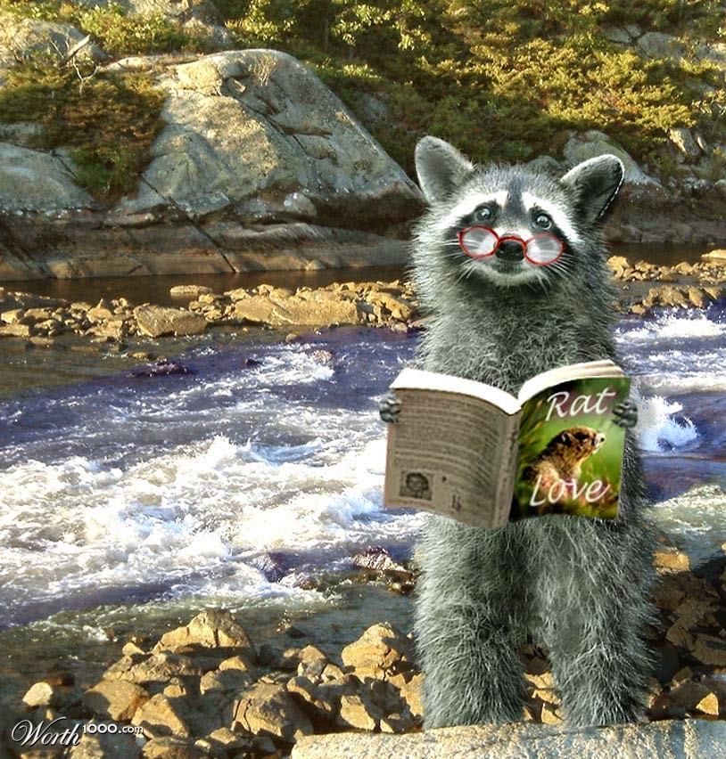 un mapache lee un libro