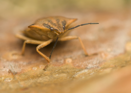 Delightful 6 Things Bed Bugs Hate Most
