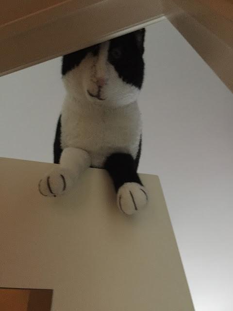 Neulottu kissa