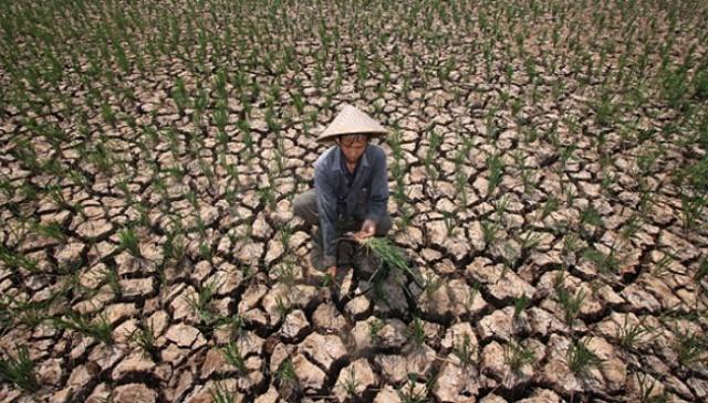 Pengertian Asuransi Pertanian Tanaman Dan Ternak