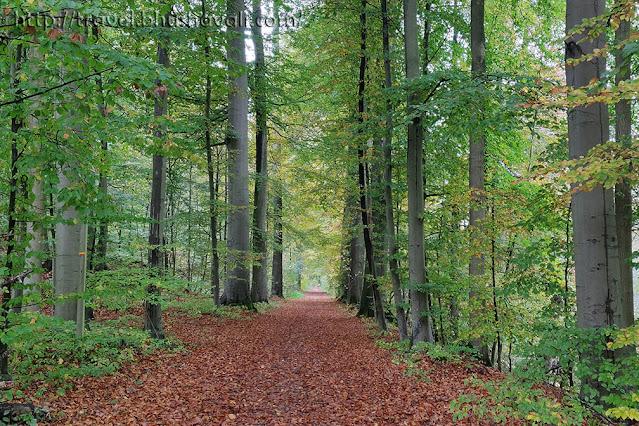 UNESCO Primeval Beech Forests - Sonian Forest, Belgium