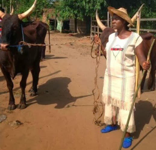 mercy johnson fulani cattle