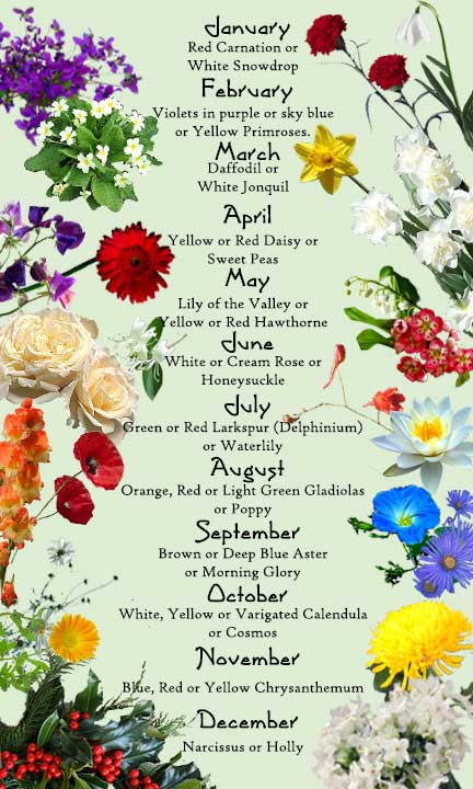 Birthday Month Flowers Each Have An Exclusive Representational Significance In The Word Of Blossoms A Plant Can Signify Deep Love Pleasure