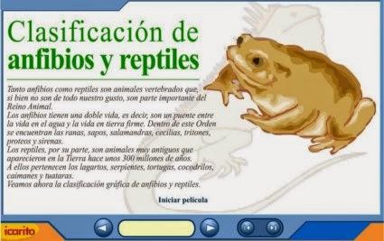 http://www.juntadeandalucia.es/averroes/centros-tic/14002984/helvia/aula/archivos/repositorio/1250/1299/anfireptil.swf