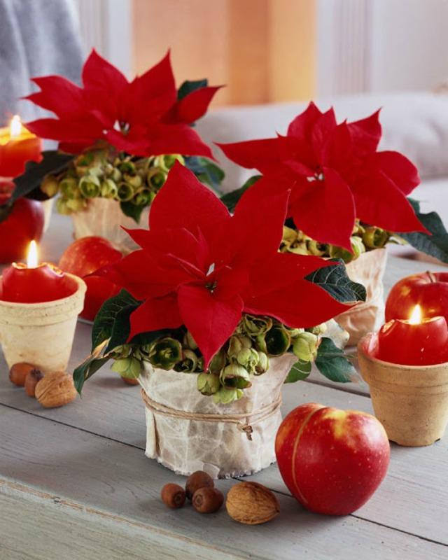 Centros de mesa con flor de pascua o poinsettia decoraci n - Centros de mesa de pascua ...