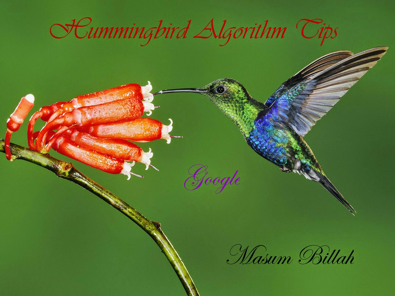 Google Hummingbird Tips