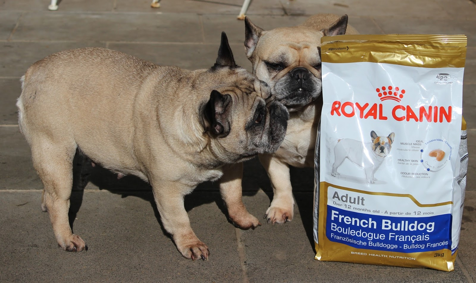 royal canin featuring my french bulldogs the human mannequin. Black Bedroom Furniture Sets. Home Design Ideas