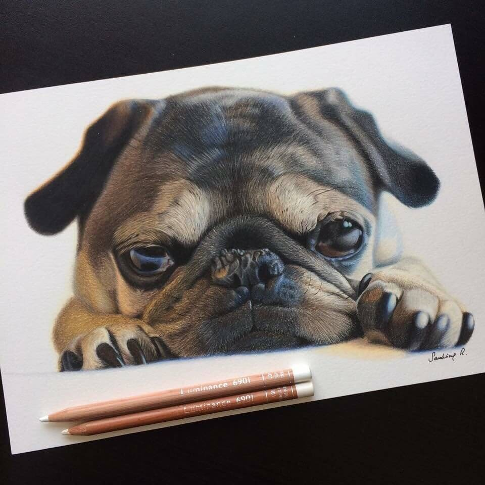 02-Bunnie-the-Pug-Sandrine-R-Sweet-Realistic-Animal-Portrait-Drawings-www-designstack-co