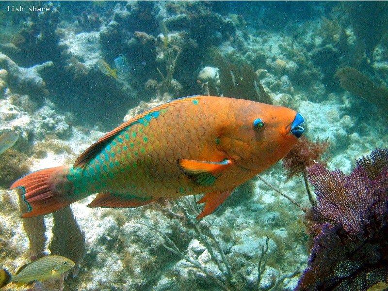 Ikan Hias Aquarium Terindah Di Dunia
