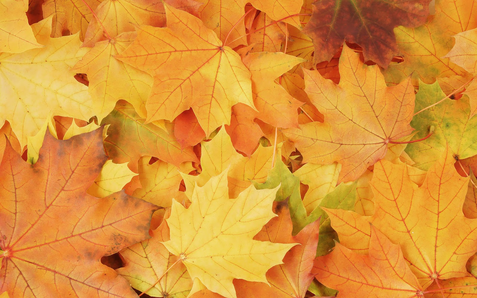 Free Download Best Wallpaper Wallpaper With Orange Yellow Autumn Leaves
