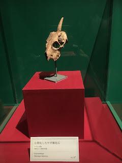 大英自然史博物館展④