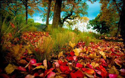 autumn-wallpapers-images-pictures