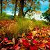 Beautiful Natural Full HD wallpapers free Love
