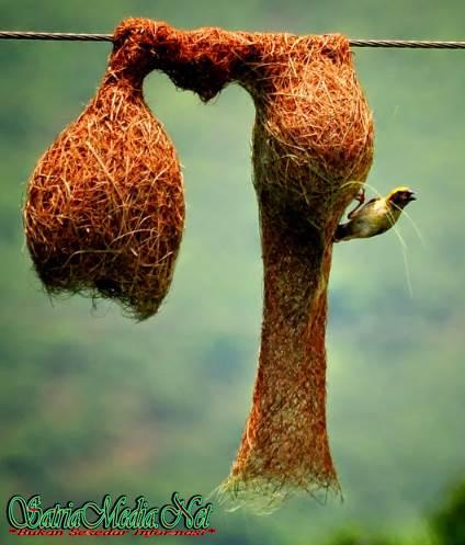 Desain Rumah Burung Dari Rumput