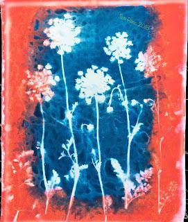 Wet cyanotype_Sue Reno_Image 473