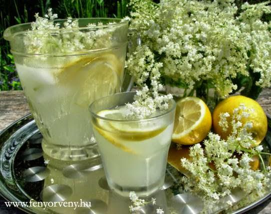 Öt náthaűző gyógynövény