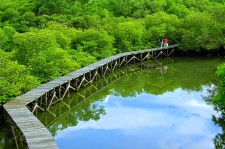 Look At This Mengenal Lebih Dekat Hutan Mangrove Bali
