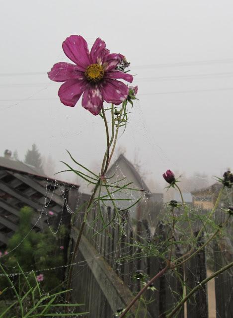 последние осенние цветы
