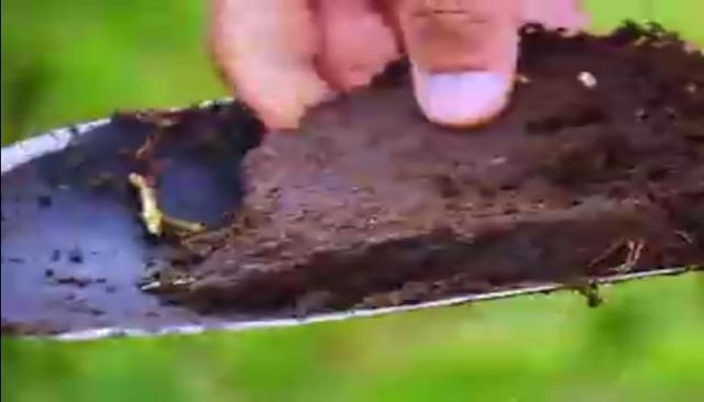 Determinar el ph del suelo
