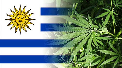 Uruguay to limit licensed marijuana users to 10g a week