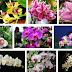 Bunga Anggrek dan Jenis-jenisnya