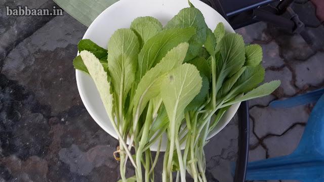 ปลูกผักกาดเขียวปลี