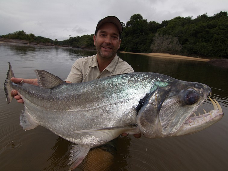 Vampire fish amazon river monsters isharenewss for Fish in the amazon