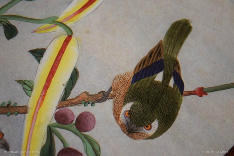 Detalle calendario 2017 Real Jardin Botánico | Colección Van Berkhey