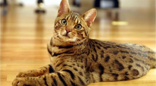 harga pasir zeolit untuk pup kucing