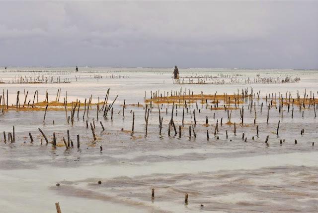 SIHABA & THE HIGH FIVES (PAJE SEAWEED CENTER - ZANZIBAR)