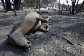 Dampak Akibat Kerusakan Hutan