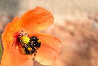 nectar-www.healthnote25.com
