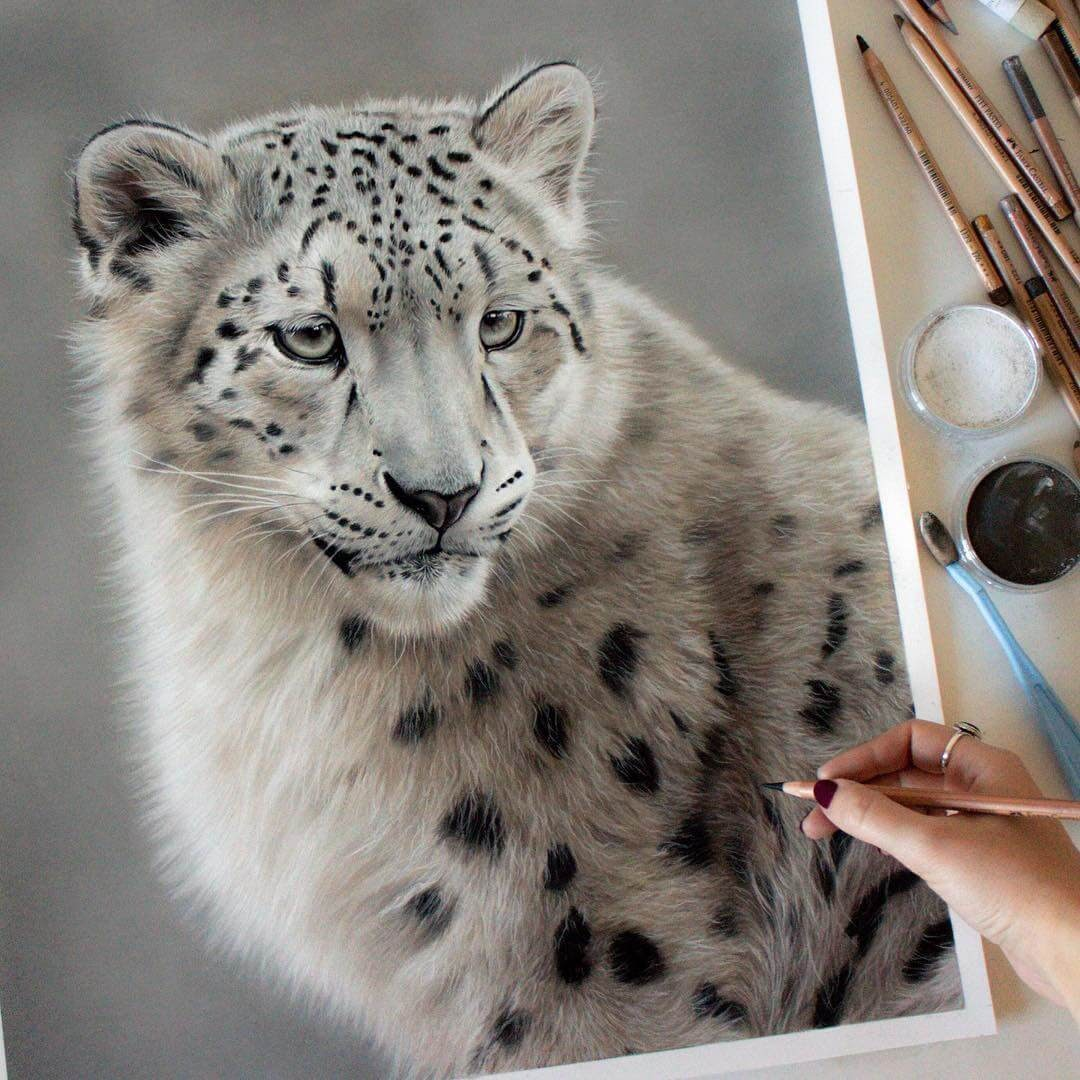 01-Snow-Leopard-Danielle-Fisher-Realistic-Animal-Portrait-Pastel-Drawings-www-designstack-co