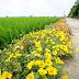 Hải Hậu: Xây dựng nông thôn mới với con đường hoa mười giờ