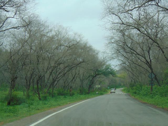 sariska forest