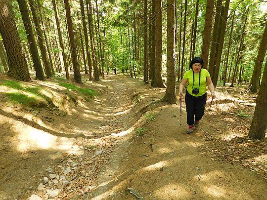 Świerkowy las na Chełmcu Małym.