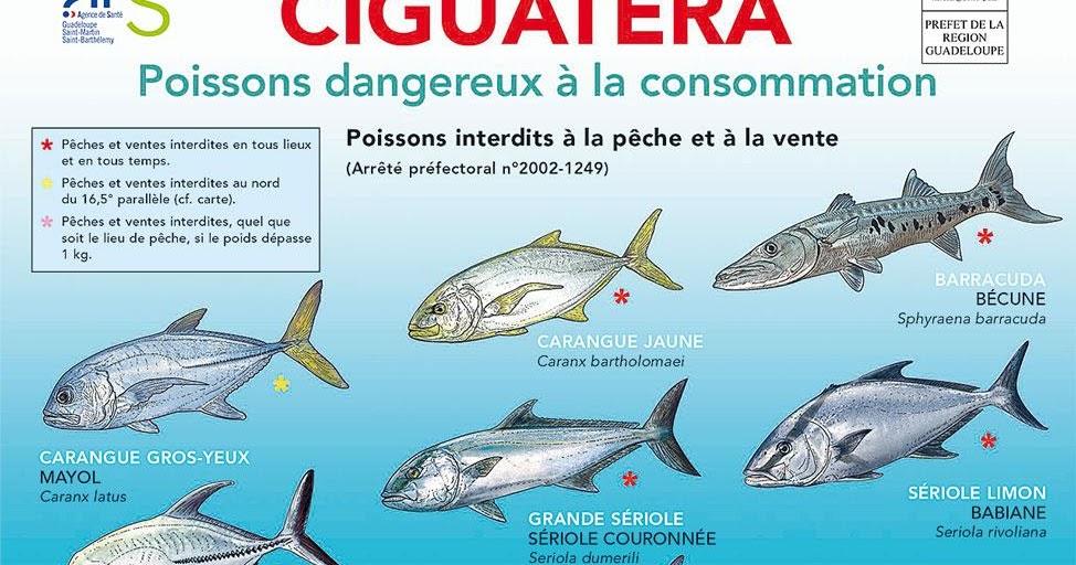 ciguatera  liste des poissons dangereux  u00e0 la consommation