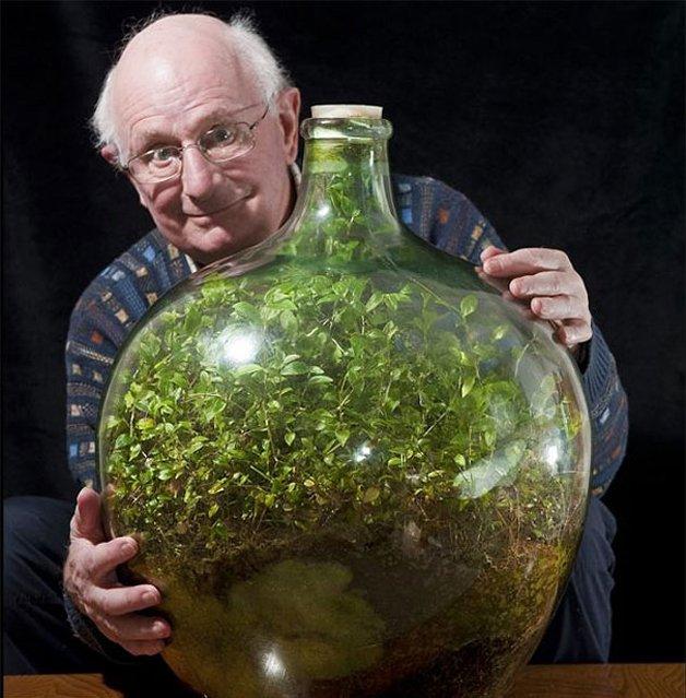 David Latimer decidiu tentar criar um pequeno jardim dentro de um garrafão de vidro.
