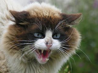 Supaya Terhindar dari Gigitan Kucing