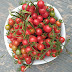 Bowl of fresh picked cherry tomatoes