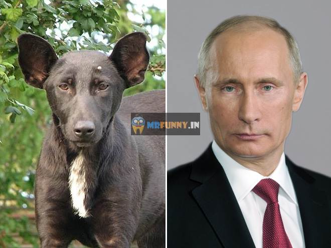 Gallery of Animals That Look Like Celebrities