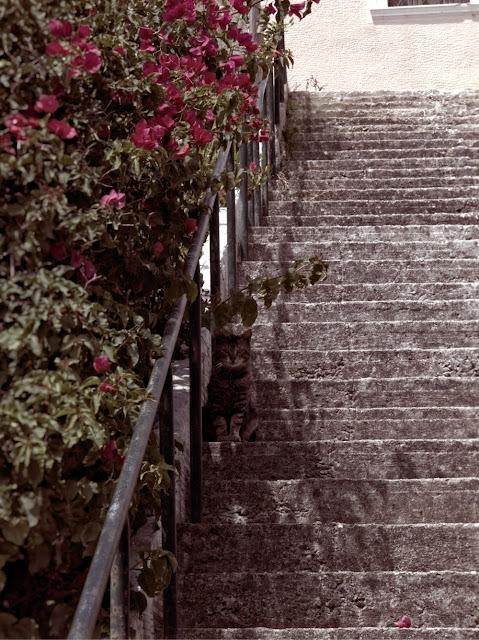 cat on stairs lixouri, kefalonia, greece photo by sue wellington
