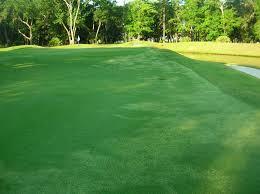 zoysia grass removal