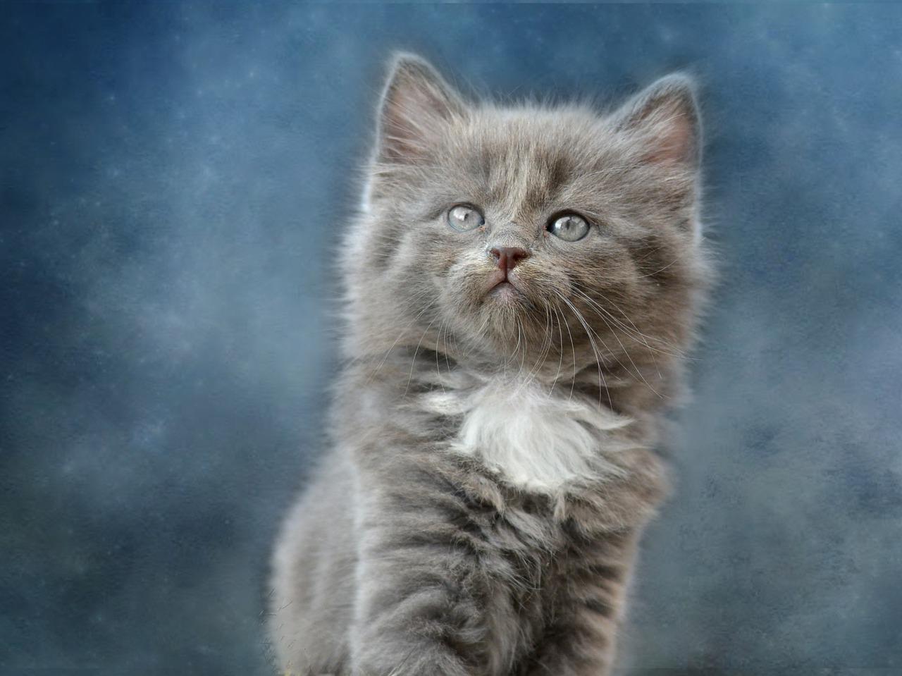 kucing bulu cantik