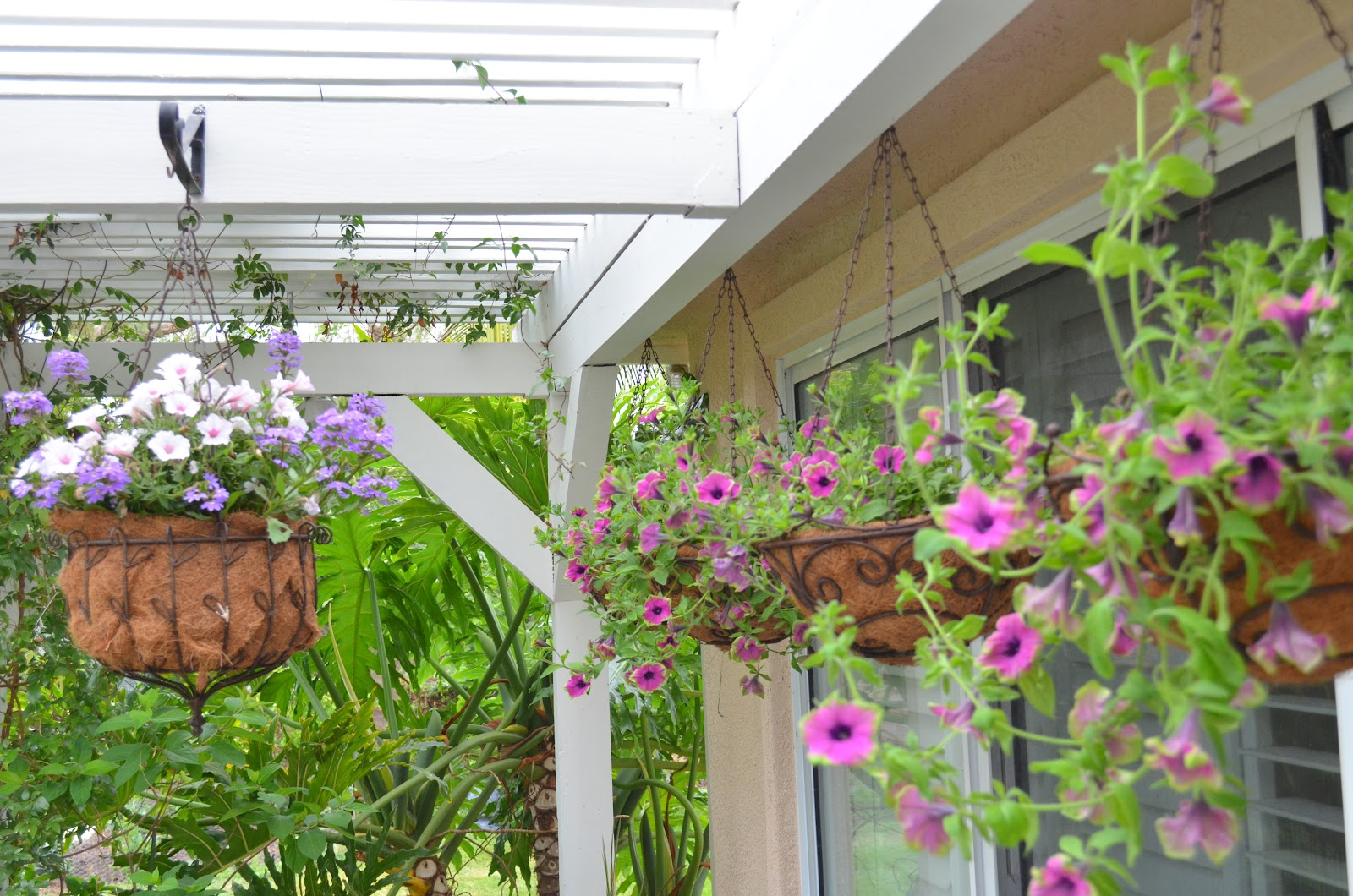 entertaining from an ethnic indian kitchen: hanging baskets