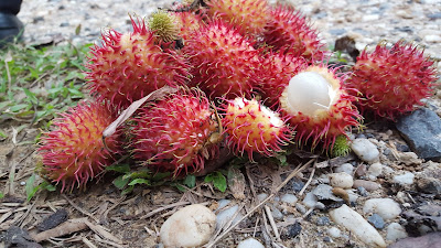 Health benefits of Rambutan Fruit for Weight Loss (Diet)