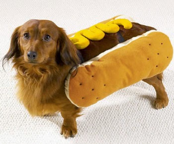 chien hot dog