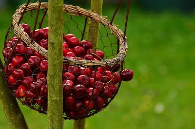 herbal, Manfaat Tanaman Herbal, ceri, buah ceri, manfaat buah ceri, kandungan gizi buah ceri, kegunaan buah ceri, Manfaat Kesehatan,