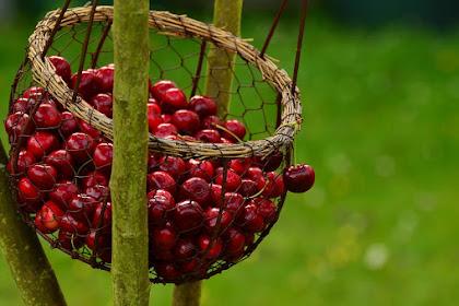 Manfaat ceri untuk kesehatan dan cara mengkonsumsinya